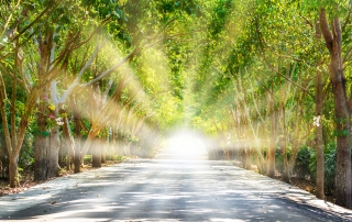 Tree tunnel on Road with Worm Light Sun Rays through from the End, The Brighter Future is Coming and Light at the End of the Tunnel Concept